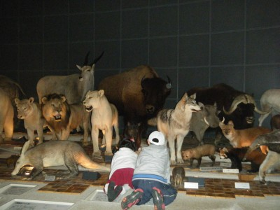色々な動物.jpg