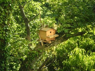 鳥の巣箱.jpg