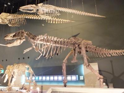 恐竜の化石.jpg