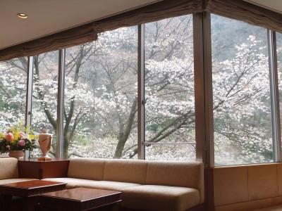 3月26日 桜の様子.jpg